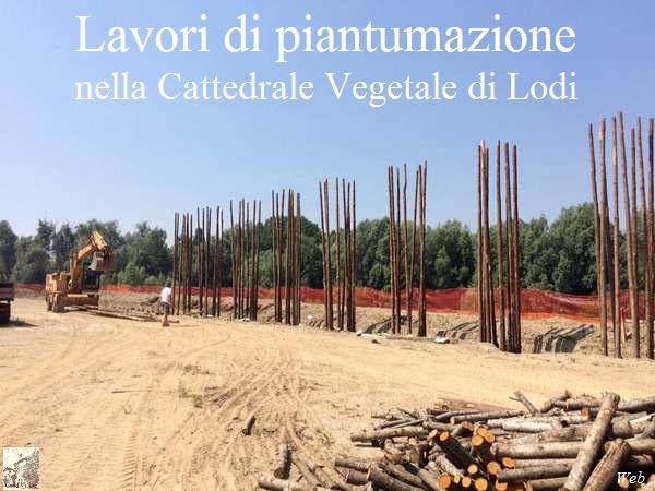 cv-2016-09-07-cettadrale-vegetale-001