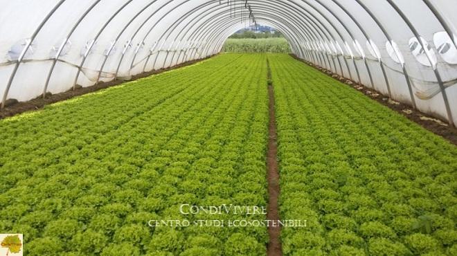 CSE 20200327 Agricoltura collasso